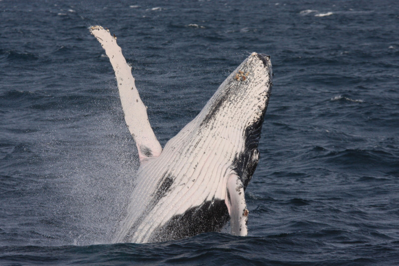 gallery-whale4